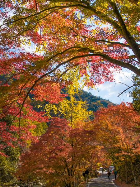 紅葉はやっぱり豪渓が一番_d0001300_22442287.jpg