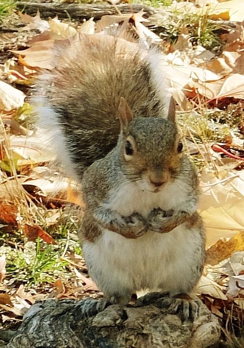 セントラルパークで冬支度中の可愛いリスくん_b0007805_23315721.jpg