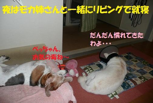 f0121712_19513864.jpg