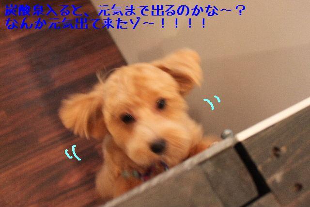 b0130018_1731267.jpg