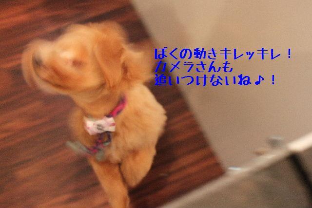 b0130018_17313662.jpg