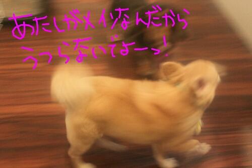 b0130018_19113242.jpg