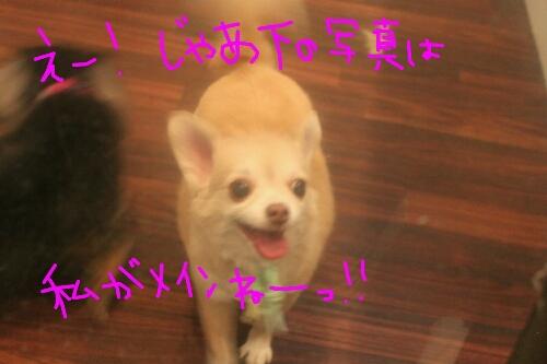 b0130018_19115413.jpg