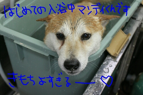 b0130018_20113018.jpg