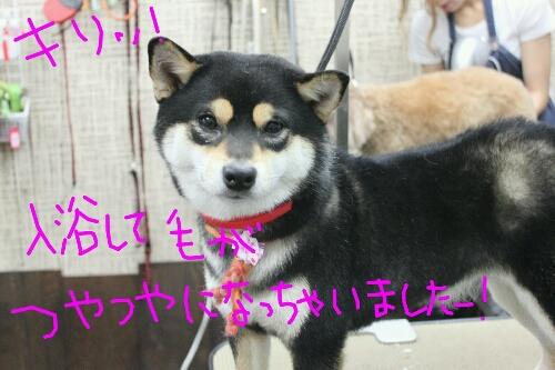 b0130018_20123862.jpg
