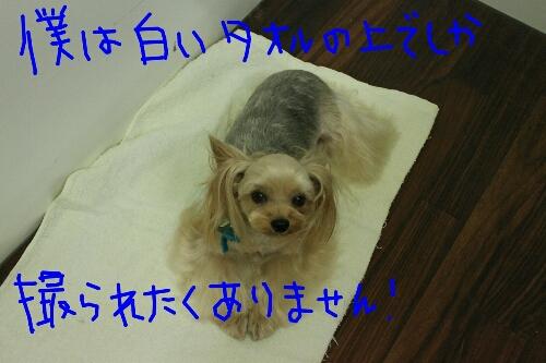 b0130018_203201.jpg