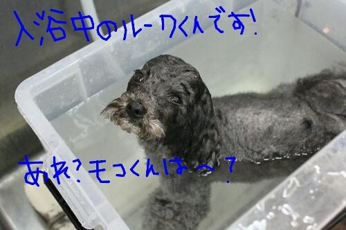 b0130018_2035871.jpg