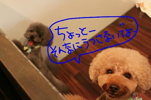 b0130018_20371519.jpg