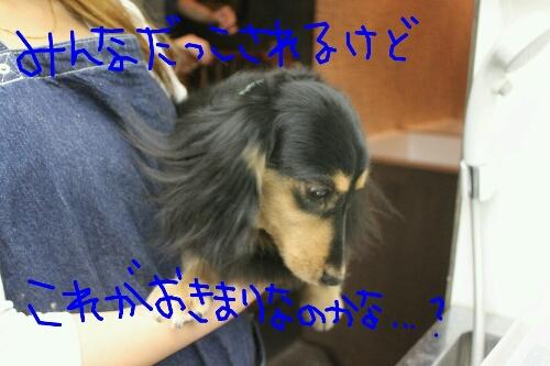 b0130018_2053120.jpg