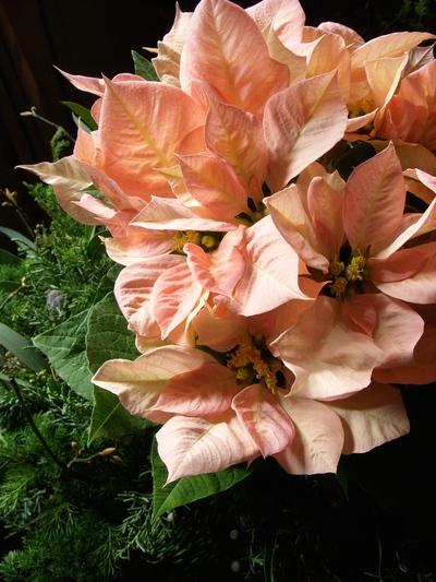 クリスマスを彩るお花たち。。。_a0229658_10382381.jpg