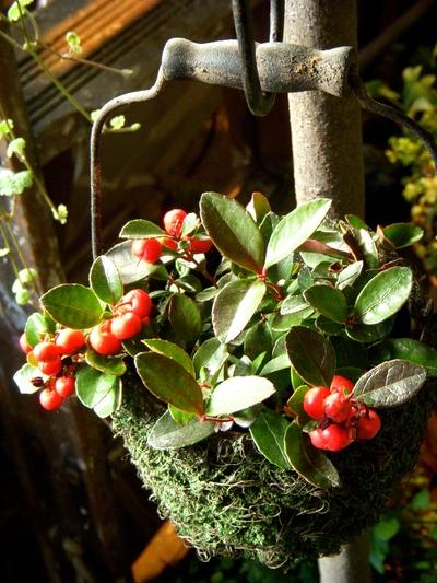 クリスマスを彩るお花たち。。。_a0229658_11105499.jpg