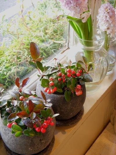 クリスマスを彩るお花たち。。。_a0229658_11152211.jpg