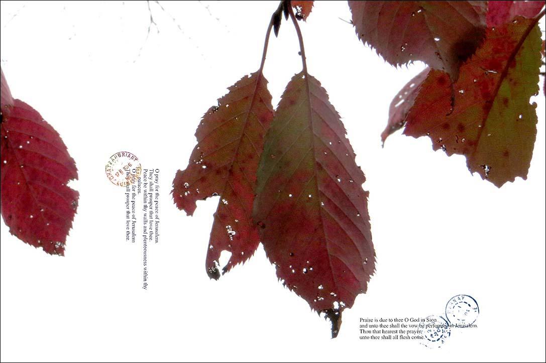 f0198771_2354243.jpg