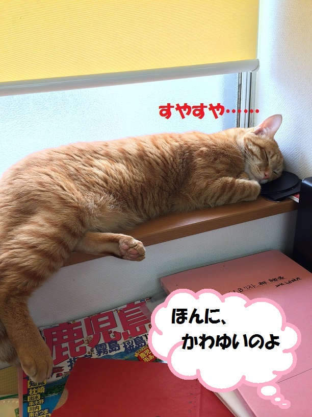 寝ているときは・・・・_c0226073_1604684.jpg