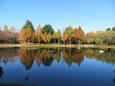 彩の森公園とジョンソンタウン_b0129807_22194767.jpg