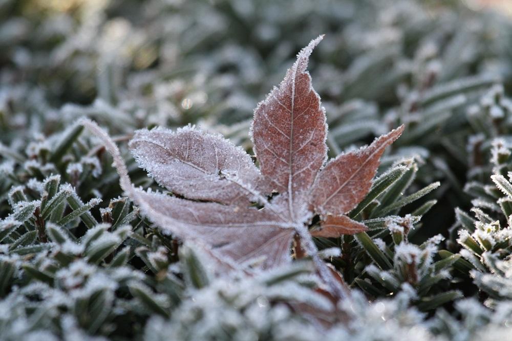今日も朝は寒かった_c0111229_171450100.jpg