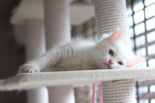 仔猫とベビニャン_a0285571_23323177.jpg