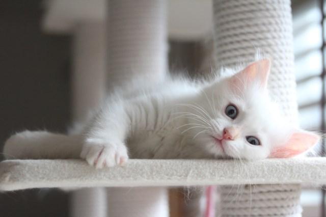 仔猫とベビニャン_a0285571_23323919.jpg