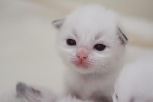 仔猫とベビニャン_a0285571_23325423.jpg