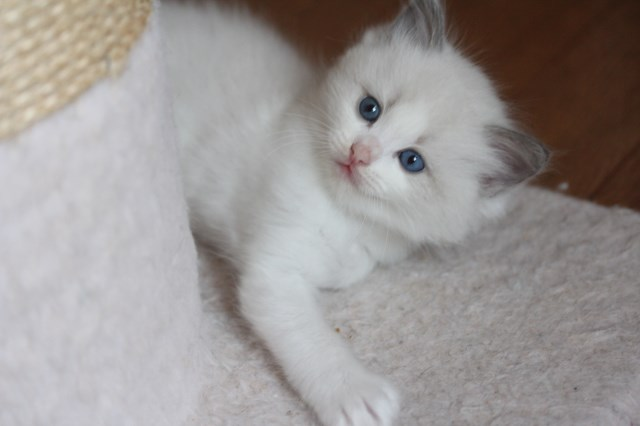 仔猫とベビニャン_a0285571_23331629.jpg