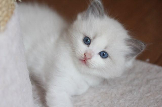 仔猫とベビニャン_a0285571_23332494.jpg