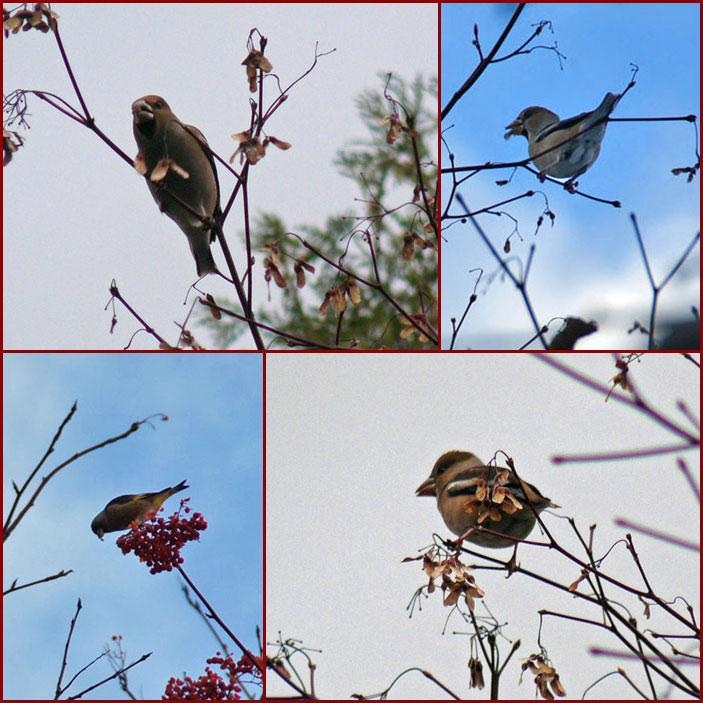 野鳥_d0162994_9502377.jpg