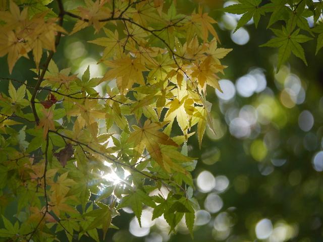 色づきは光とともに_f0147895_14282784.jpg
