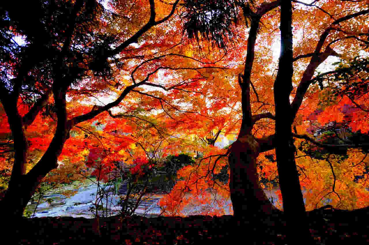 【京都】高野川_c0348200_21483449.jpg