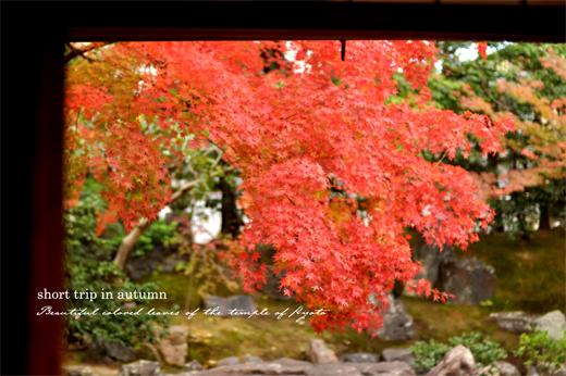秋の古都へ、小さな旅。【京都ところどころ1】_d0174704_113301.jpg