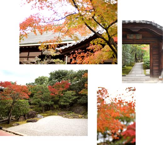秋の古都へ、小さな旅。【京都ところどころ1】_d0174704_1310289.jpg
