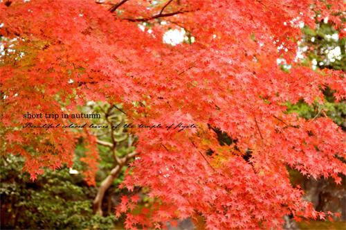 秋の古都へ、小さな旅。【京都ところどころ1】_d0174704_13294910.jpg