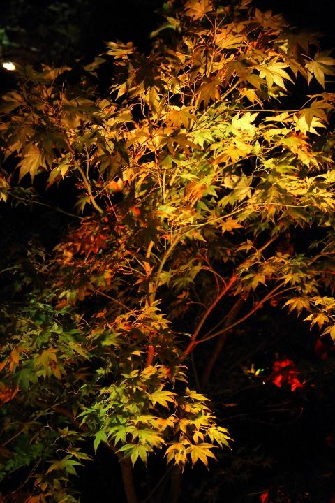 まだ紅葉には少し早い夜_b0190710_0143531.jpg