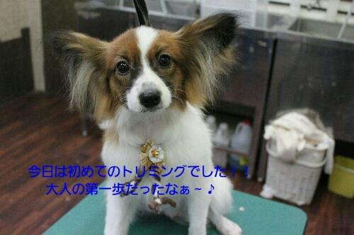 ピザハット_b0130018_0105180.jpg