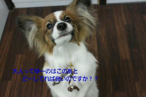 ピザハット_b0130018_0115032.jpg