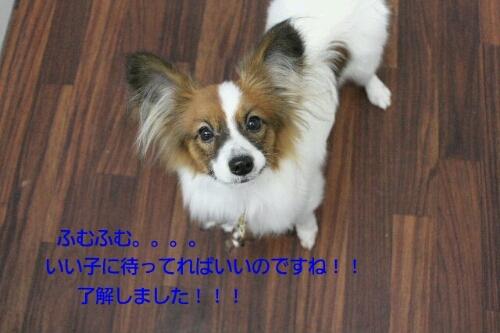 ピザハット_b0130018_012547.jpg