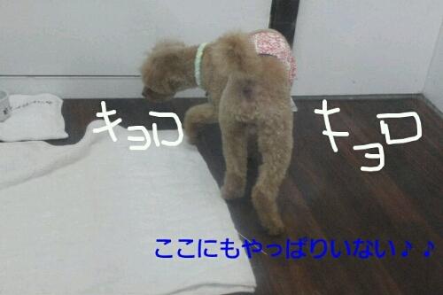 ピザハット_b0130018_0135562.jpg