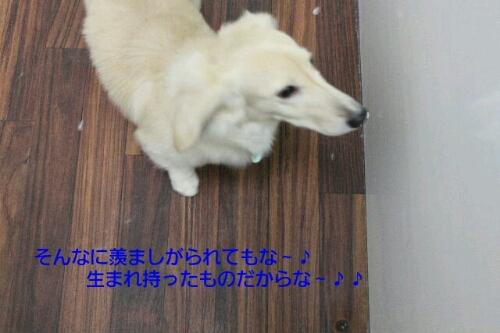 ピザハット_b0130018_017636.jpg