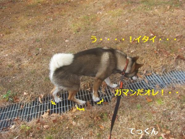 f0143123_9495950.jpg