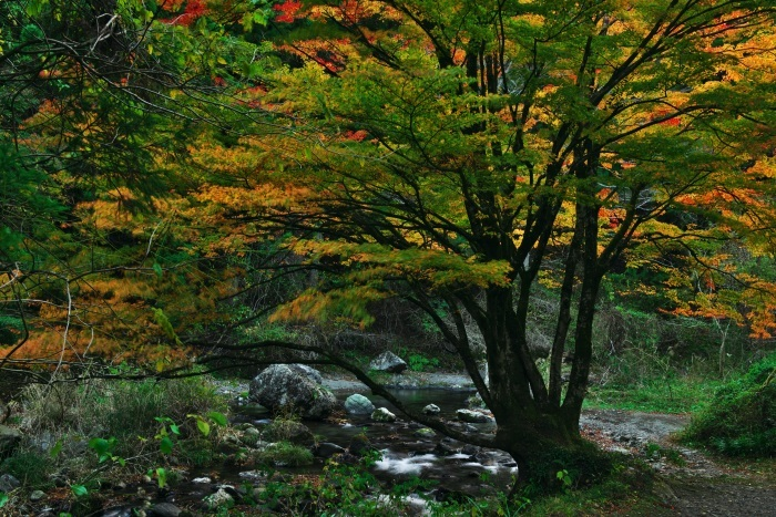 Tree  ・・・色づく秋・・・_f0333031_03502065.jpg
