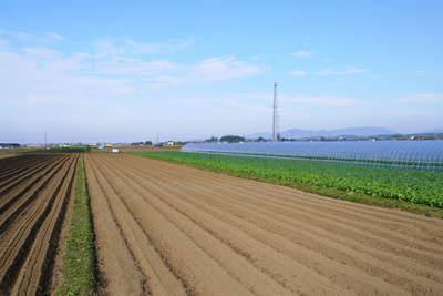 有機栽培の水田ごぼう ごぼうの種まき その1_a0254656_1721487.jpg