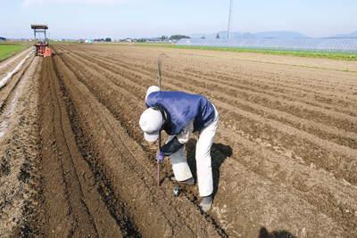 有機栽培の水田ごぼう ごぼうの種まき その1_a0254656_18193156.jpg