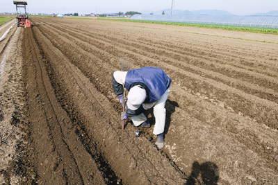 有機栽培の水田ごぼう ごぼうの種まき その1_a0254656_18204189.jpg