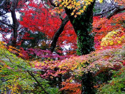 紅葉がきれいですよ_b0145257_9352966.jpg