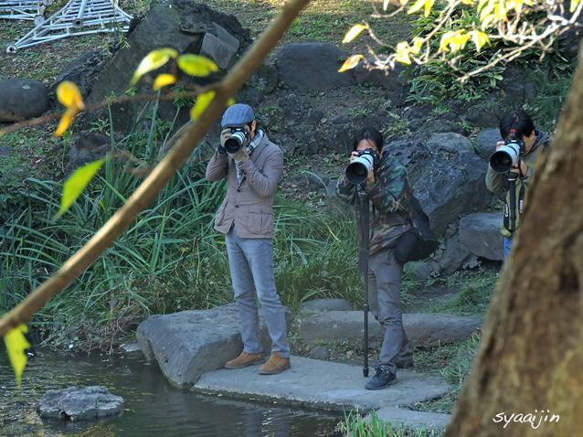 日比谷公園にお住まいの『シラサギ』_d0251161_16322183.jpg
