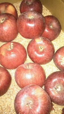 りんご到着!!!_a0236063_10513257.jpg