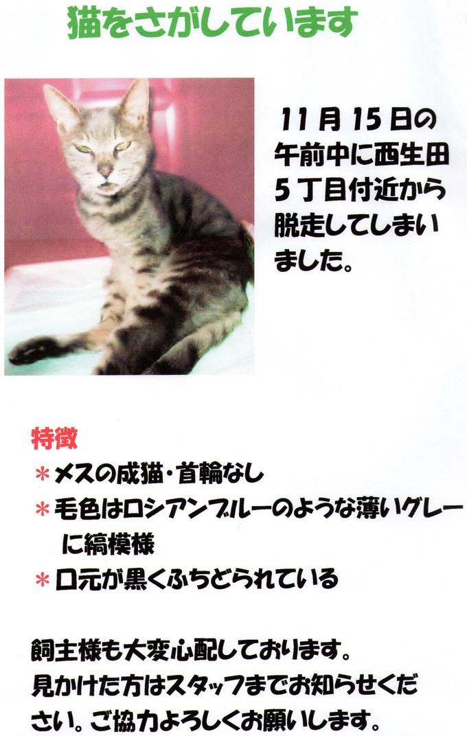 猫を探しています!_e0288670_1532292.jpg