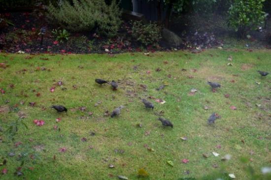 庭がぼこぼこ_d0129786_16492790.jpg