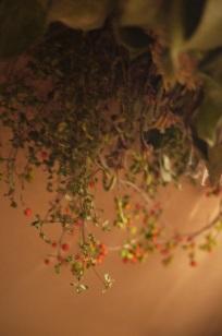 ②追加入荷しました「フボーと植物展 白3」_f0226293_859917.jpg