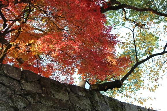 熊本城の紅葉の楽しみ方は?_c0052304_06420304.jpg