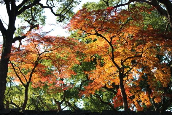 熊本城の紅葉の楽しみ方は?_c0052304_06441121.jpg